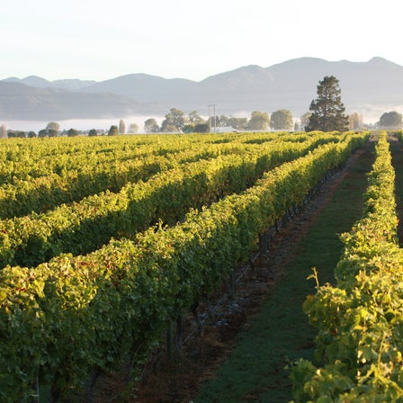 Top New Zealand Wineries 2021 - The Real Review